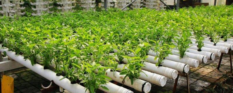 无土蔬菜种植技术