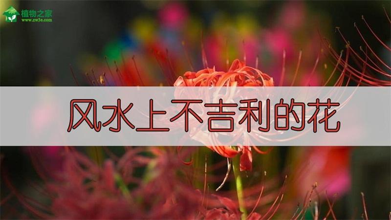 风水上不吉利的花
