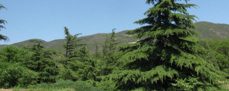 常见园林树木160种