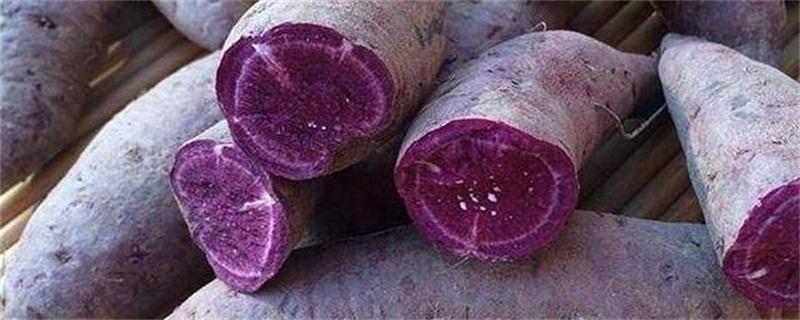 中国哪里产的紫薯最好