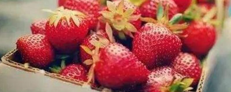 草莓什么季节有