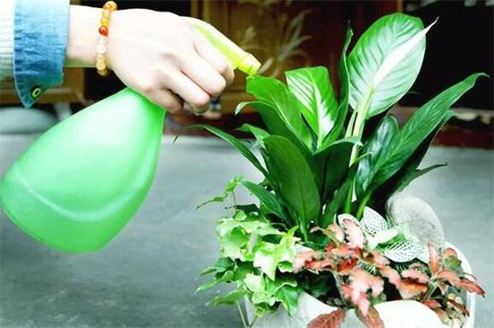 浇花的水为什么要晒,可去除氯气降低对花卉伤害