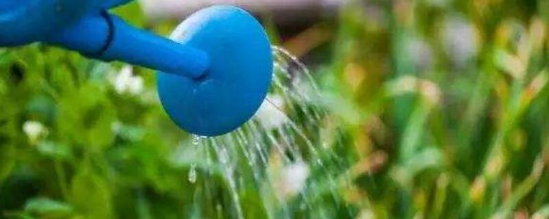 花什么时候浇水最好
