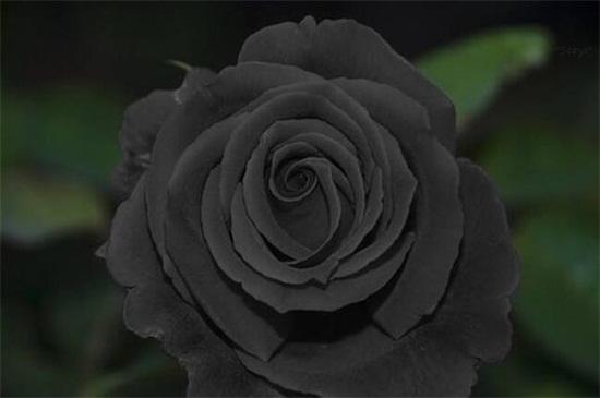 风水上不吉利的花有哪些,盘点十大不吉利花