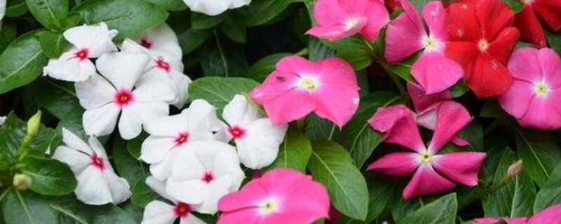 室内花卉养殖方法