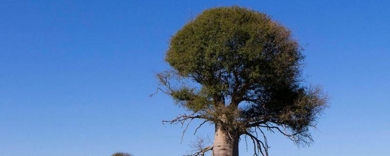 树的生长过程