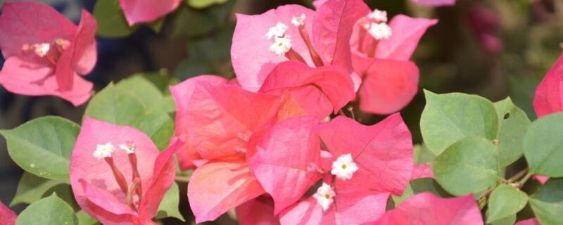 四季开的花有哪些