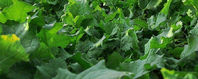 种菜用什么绿植屋追肥长得快