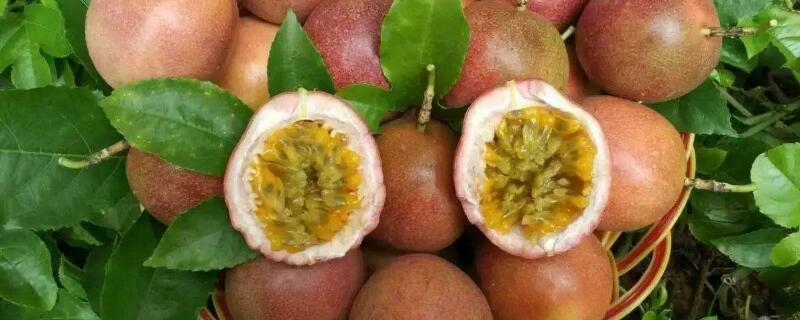 百香果怎么种盆栽