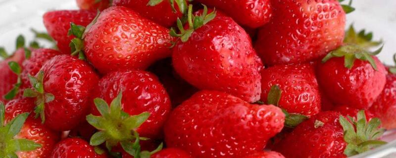 草莓有多少个品种