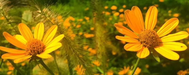5种适宜种植的耐寒宿根花卉