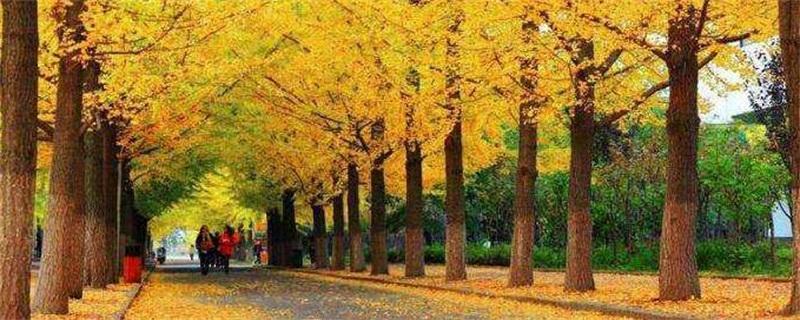 风景树种类