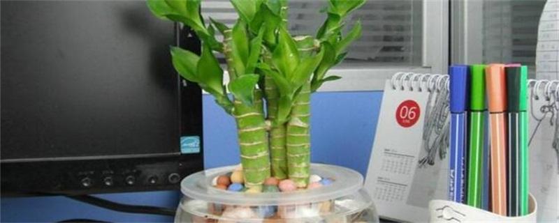 水竹子怎么养活