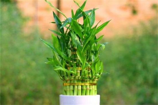 竹子风水禁忌有哪些,摆放阴凉处容易招鬼