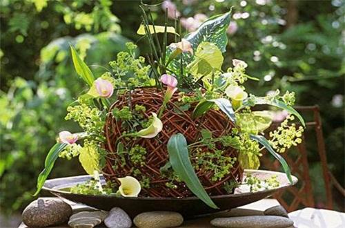马蹄莲不开花的原因,光照不足积水烂根
