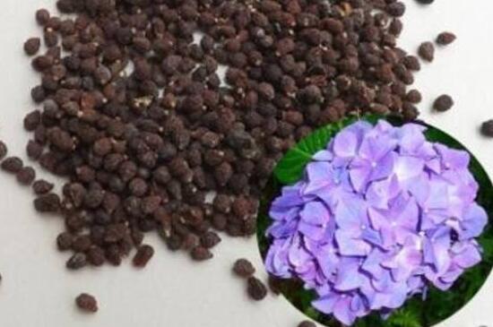 蝴蝶兰种子怎么发芽,清洗种子覆盖保温薄膜