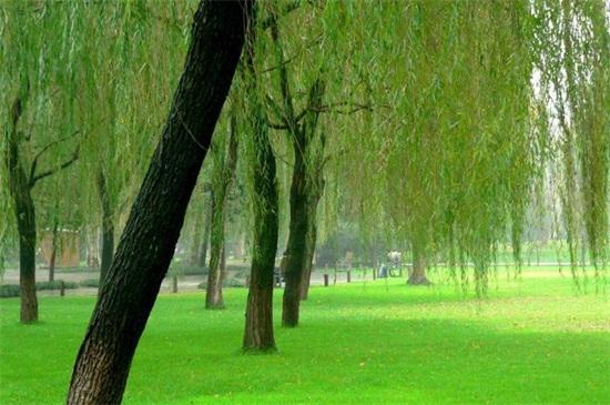 风水上的十大凶树,槐树可招阴寓意凶煞