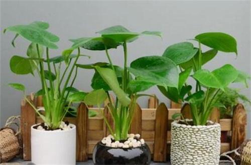龟背竹喜欢什么土壤,疏松保水性强的基质