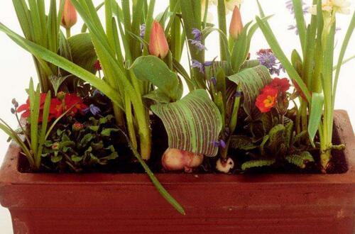 水仙花盆栽好还是水栽好,盆栽利于生长