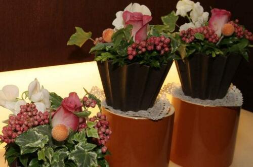 盆栽烂叶子怎么办,停止施肥散光养护