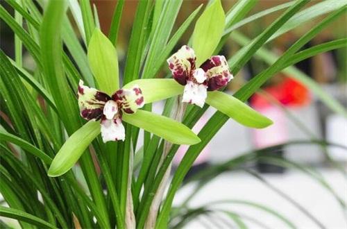 阿斯匹林主要能浇哪种花,可浇兰花和栀子花