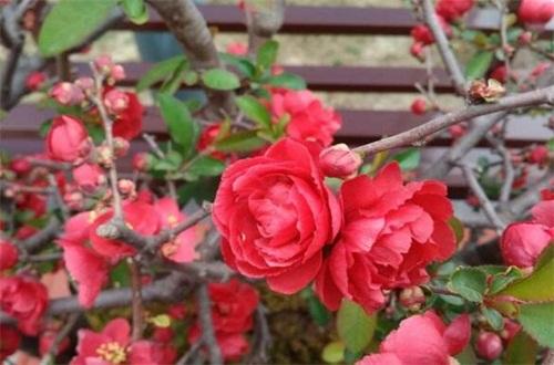 桃花盛开是什么季节