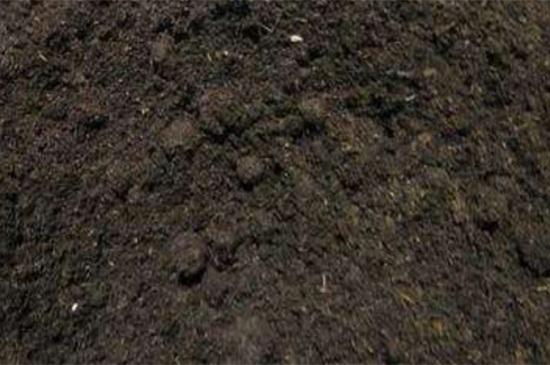 如何种西瓜籽小盆栽,浸泡种子泥炭土栽培