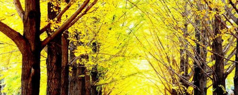 北方种植什么树最值钱