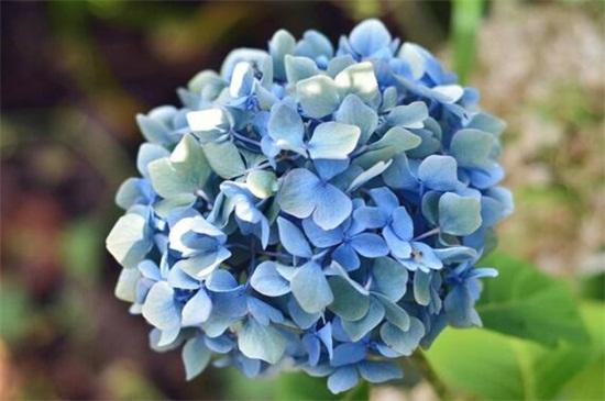 开花多的喜阴的花卉