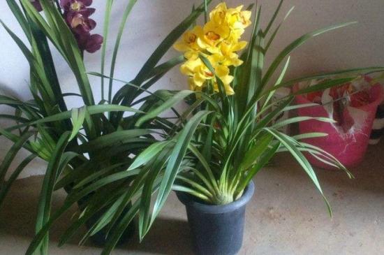 兰花种子种植方法如下