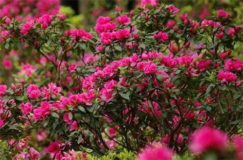 代表财富的花有哪些,盘点八大常久财富花卉
