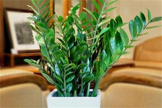 十二种招财花,盘点有招财风水作用的花卉
