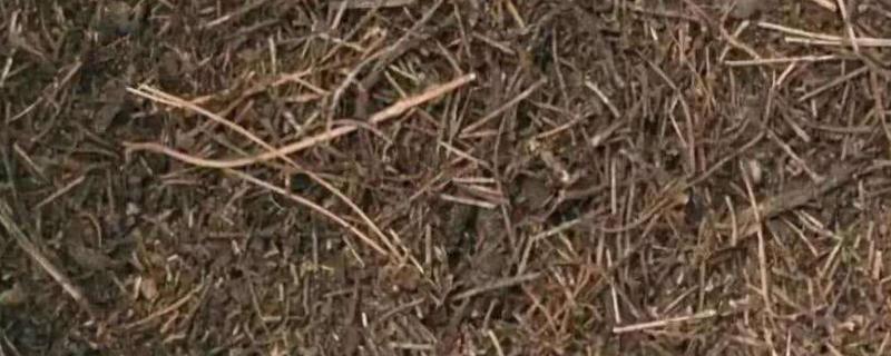 松针养兰花的配方
