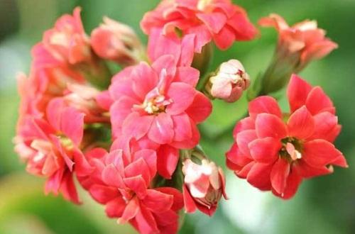 耐阴又容易开花的植物,这4种花卉耐阴极强易开花