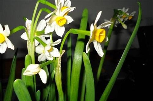 十大寓意不幸的花,盘点十种寓意凄美之花