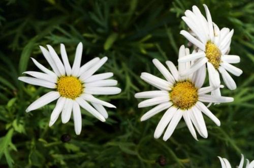 花期最长的花排名,4种花期最长的花