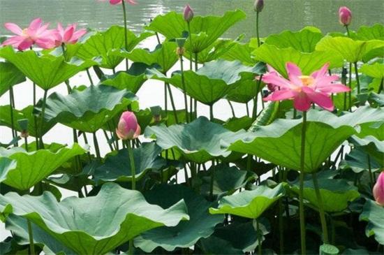 十大最香的花,盘点10种最香最美花卉