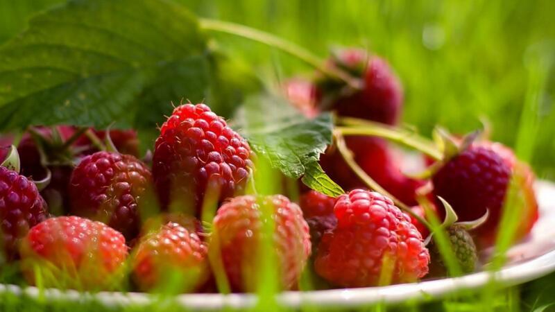树莓的种植方法