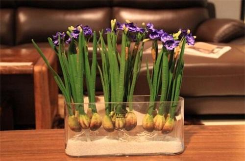 水仙花不开花怎么办,增强光照及时换水养护