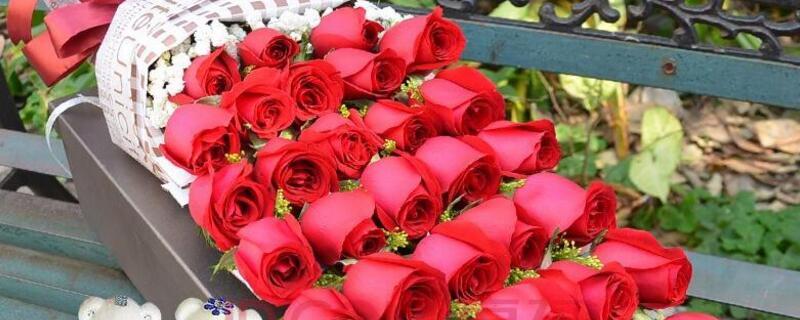33朵红玫瑰花语是什么