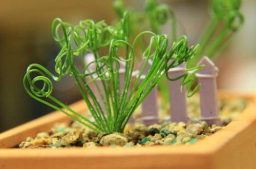 弹簧草的作用有哪些,装饰环境招财纳宝