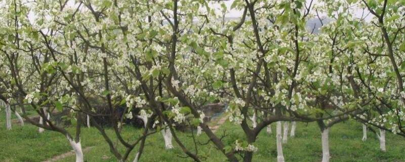 春天最早开花的树
