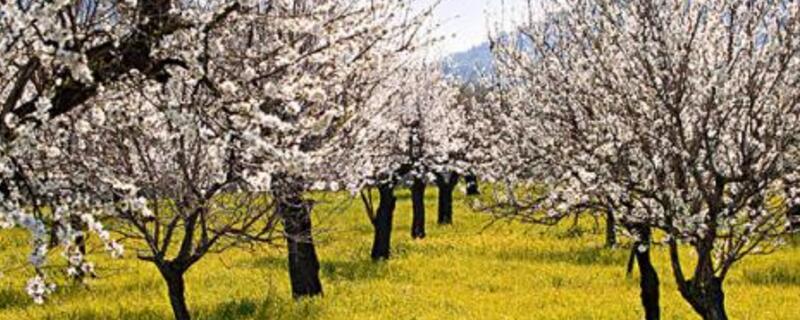 春天开花的树有哪些