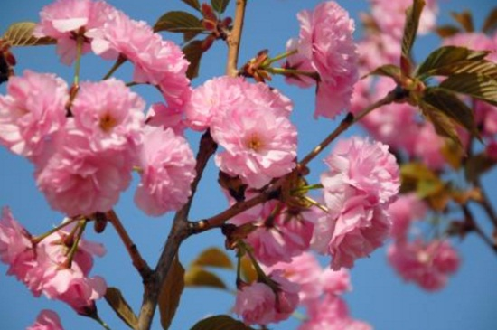 三四月份开的花