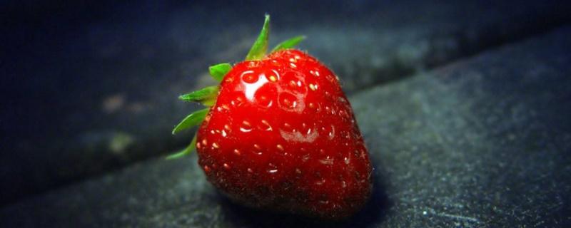 草莓种子发芽后怎么办