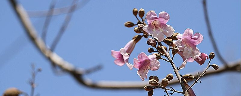 4月份的花