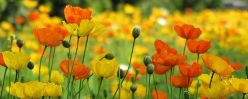 春天的种子有哪些