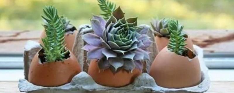 鸡蛋壳不适合什么花