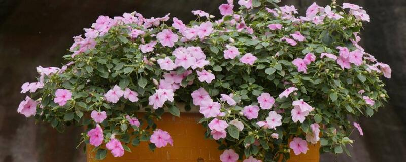 怎么养花才能更旺盛