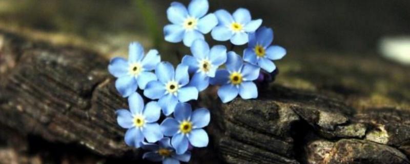 代表想念的花